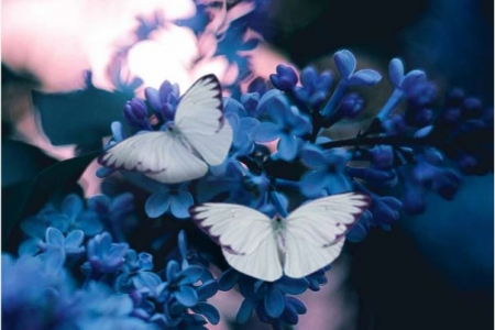 Emerge a butterfly sq